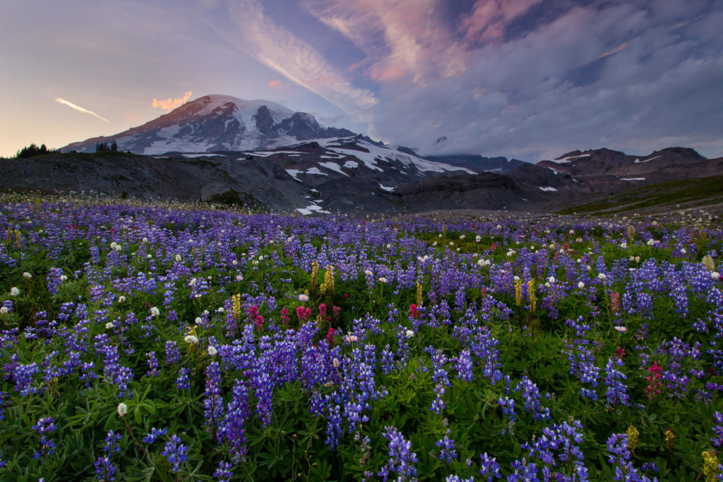parcul-national-mount-rainier